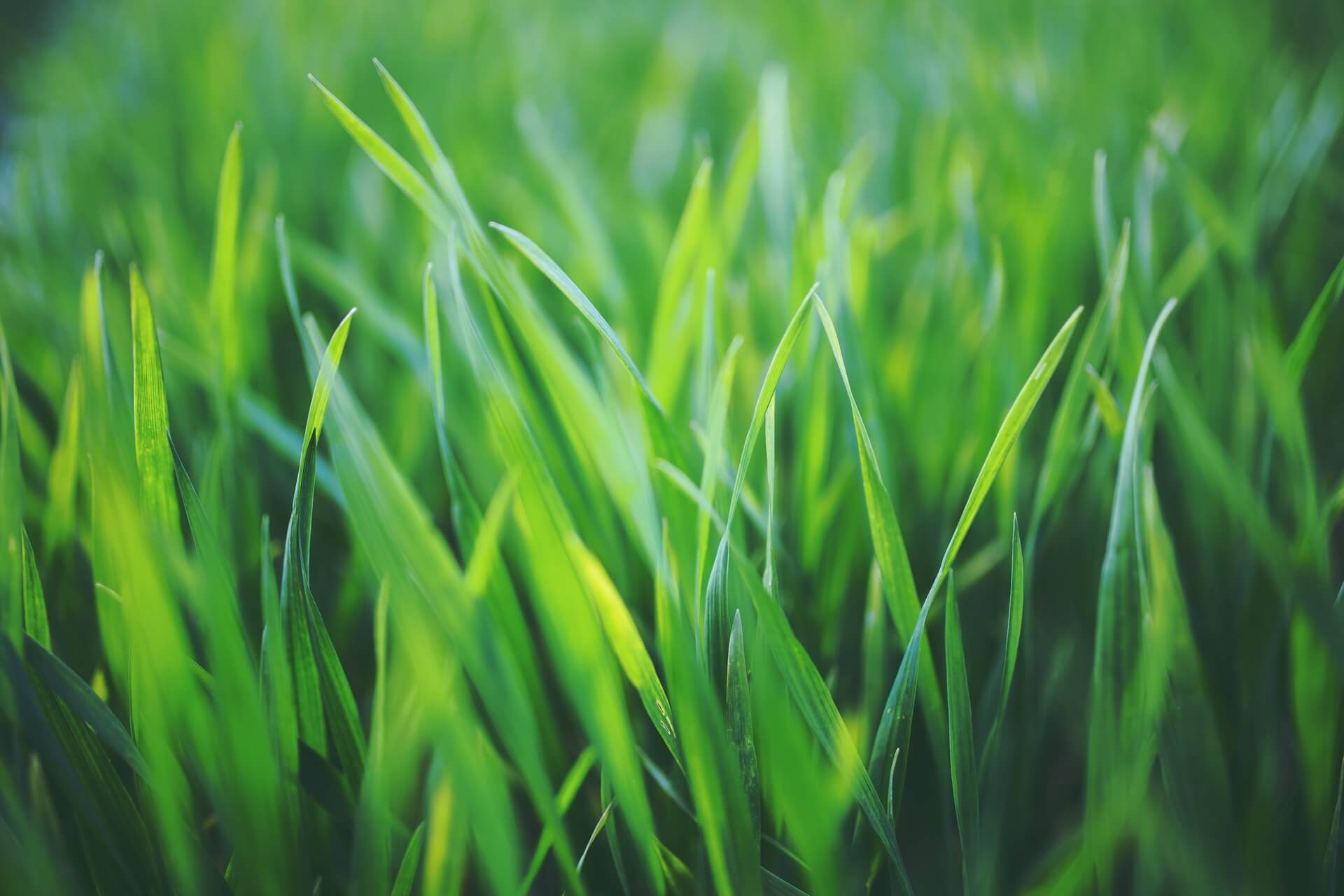 green-touch-jardinier genève